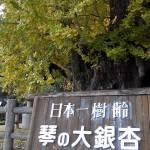 kin-i_001